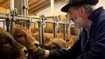 """""""Die haben ihren eigenen Kopf"""", sagt Klement Fend, """"Tiere sind wie Menschen."""" Foto: Conie Morarescu"""