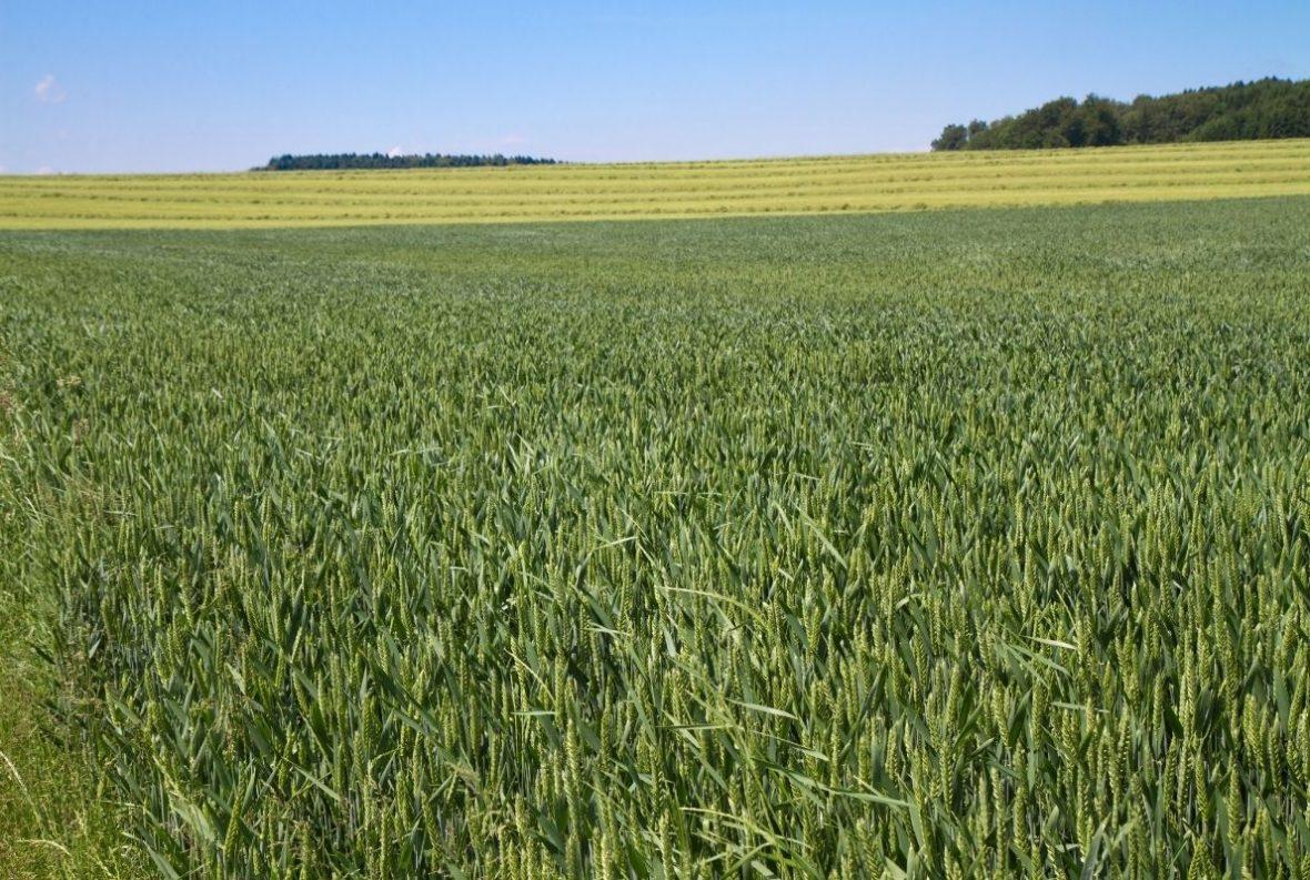 Qualität statt Masse sollte beim Ackerbau im Landkreis Vorrang haben, findet Michael Stark; Foto: Canva
